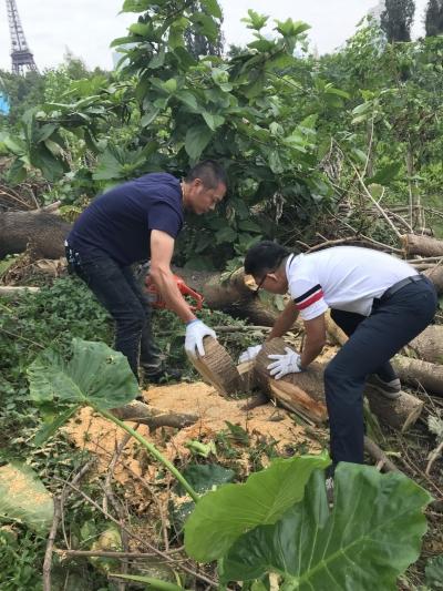 树枝循环利用效率有待提升!专家齐聚深圳红树林讲解普及防台风知识