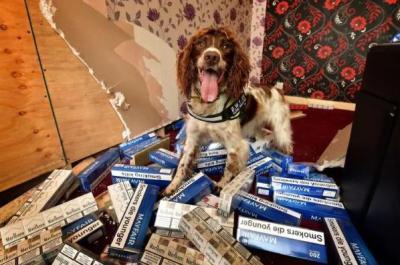 缉毒犬被毒贩悬赏2.5万英镑 5年内破600万英镑非法烟草