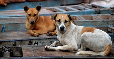 研究称新冠病毒可能起源于流浪狗