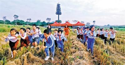 """""""稻米之路""""实践课受热捧,已吸引全市近300个中小学亲子家庭参与"""