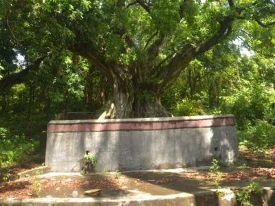 坪山区完成150棵古树名木安全与健康状况评估工作