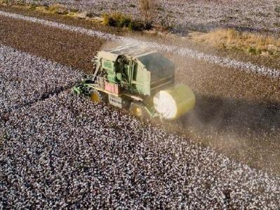 中纺联:坚决反对在供应链中排除新疆棉花及其制品的错误行为
