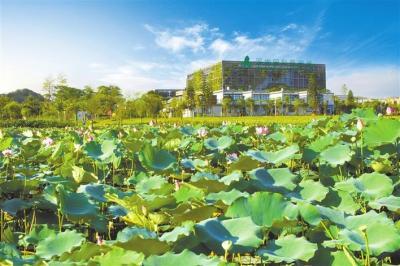 顶级专家助力龙岗打造碳中和先行示范片区  深圳国际低碳城绿色发展专家咨询会在京召开,组建一流智库为低碳发展献策