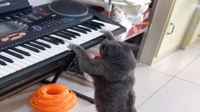 """猫咪半夜""""弹琴""""吓坏主人,网友:有音乐梦想的猫"""