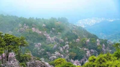 """珠三角建成全国首个国家森林城市群: """"森""""圳真美"""