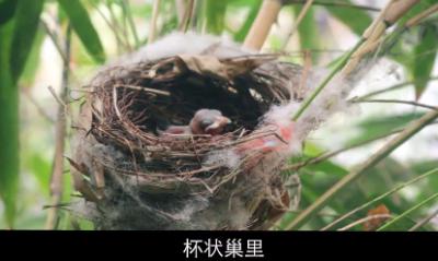 【坪山全域自然博物⑭】家有小鸟初破壳