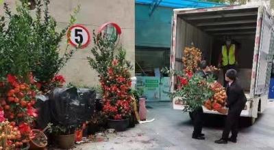 38万盆实现全回收零填埋 福田区年花年桔回收处理延长至4月底
