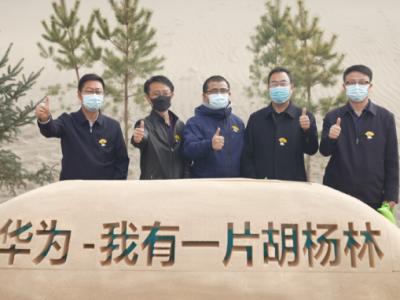 华为甘肃公益项目:携手消费者种植6万余株胡杨树扎根沙漠