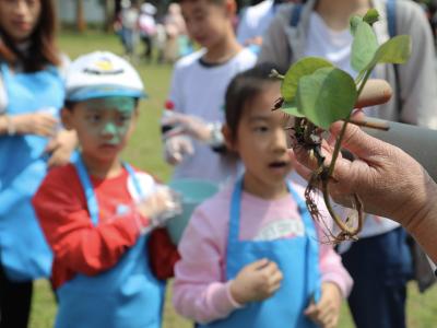 2021洪湖公园碗莲种植活动开幕