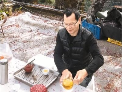 冻顶乌龙茶激烈碰撞  台湾春茶茶王评出