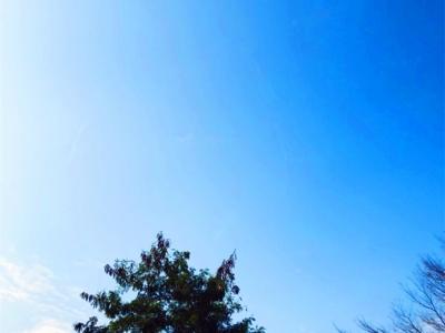 未来5天,深圳天气都很暖和,偶有零星小雨