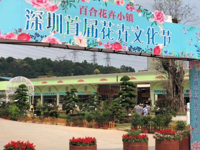 龙岗这个花卉文化节,带你一起走进浪漫的五月花海!