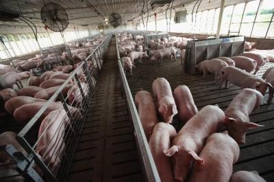 特朗普贸易战争的下一个受害者可能是美国牧场主和肉类加工产业