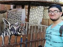 尬极了!埃及一动物园用驴假扮斑马 园方给驴上色伪装