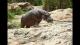 男子偷袭洛杉矶动物园的河马 遭洛城警察调查
