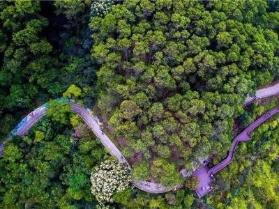 30多位学员在梧桐绿道自然教育中心培训自然导赏