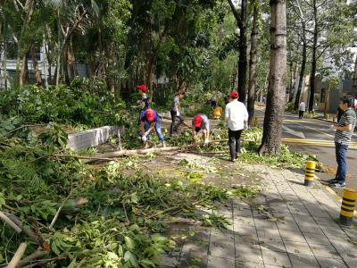 紫荆社区工作人员加班加点清理路障