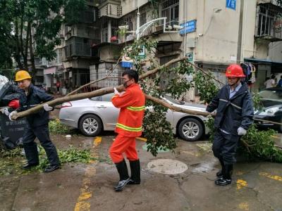 台风过后,深圳罗湖政协委员组织义工走上街头协助清理倒伏树木