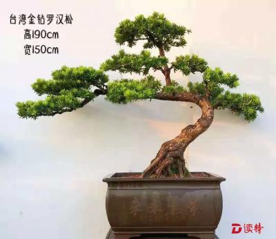 国庆假期去深圳百合花卉小镇看花镜·盆景展吧!
