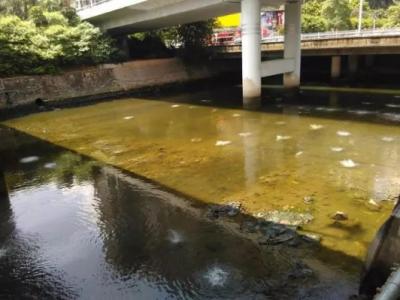 新圳河清淤工程及雨污分流、正本清源计划年底前完工