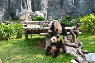 西麗20戶腦傷寶寶游覽深圳野生動物園