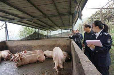 农业农村部:杜绝使用餐厨剩余物喂猪 不允许隐瞒疫情
