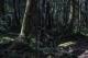 俄国妈妈深信巫术 将6岁儿子丢在深山老林中13小时为驱走恶魔