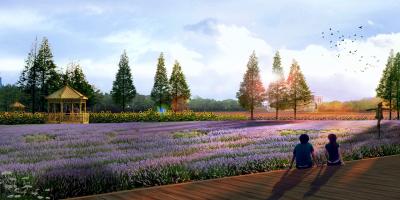 沙井40万平米花海或7月开放 宝安面积最大花田建设项目启动