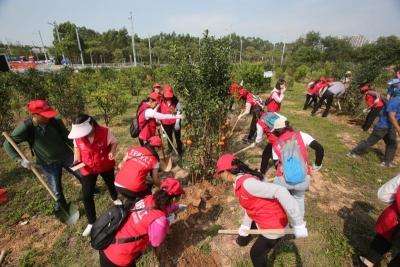 年桔留香播种希望!宝安年桔回收利用累计超过23万盆