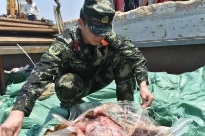 插翅难逃!广东海警在湛江海域涉嫌走私冻品逾百吨