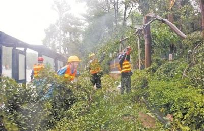《深圳市提升台风暴雨灾害防御能力重点任务实施方案》正式出台