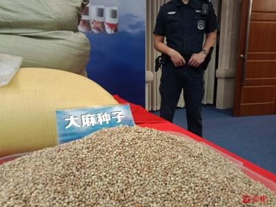 全国首例!佛山警方侦破大批量交易大麻种子案