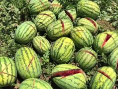 两千多个西瓜被砍烂?警方:与报道有出入 正调查中