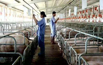 国办印发意见:稳定生猪生产,将落实情况年底前上报国务院