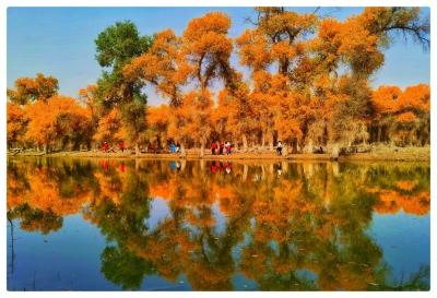 """今日,深喀號·讀特援疆專列抵達塔里木胡楊林。胡楊林極致燦爛的美,簡直是鏡頭的""""盛宴"""""""