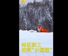 """""""大興安嶺火狐貍""""當事人道歉了,""""看圖寫話""""的媒體呢?"""