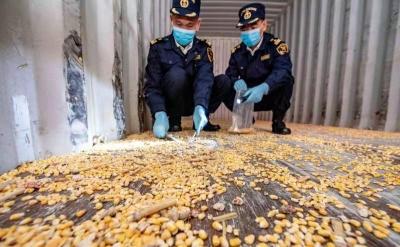 46個進境空集裝箱竟攜帶殘留轉基因玉米!被汕頭港海關截獲退運