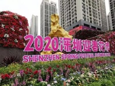 深圳迎春花市中心會場來了!三大特色帶來全新花市體驗
