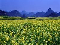 走进最美的春天 | 罗平 …… 中华大地上的第一抹春色,罗平是白雪盛放中的一片令人经验的金黄,饱满而热烈。