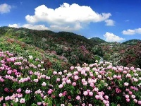 走进最美的春天 | 毕节 …… 如果你在春天去过贵州,那你定会知道,贵州的春天就叫毕节,只因那盛放的百里杜鹃。