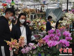 北京市民清明假期選購花卉