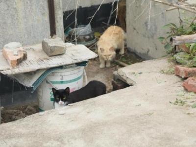 天台上的困局:数十只流浪猫生活在小区楼顶无人管理