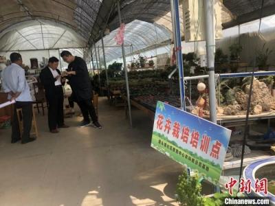 探访江苏如皋新港村:从穷乡僻壤到花卉苗木之乡