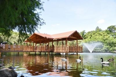 """深圳野生动物园""""锦鲤亭""""正式向游客开放"""