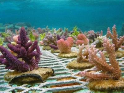 """全国珊瑚日活动在深圳大鹏启动 500人认养""""珊瑚宝宝"""""""