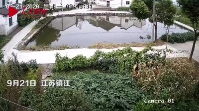 一秒也没犹豫!过路司机跳水救落水幼童