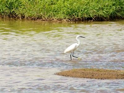 发现光明最美治水景观丨茅洲河碧道示范段:草长平湖白鹭飞