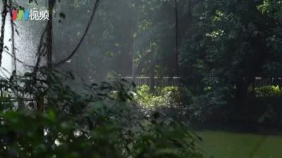 棕熊12月还在纳凉?!深圳冬天的动物园是这样的大场面…