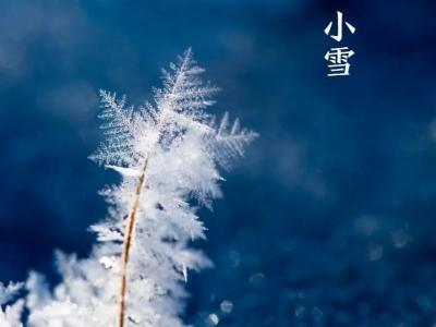 今日小雪丨小雪忽至,万物冬藏,愿君多珍重!