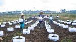 贵州黔西:花卉苗木产业助增收